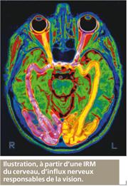 Le corps humain transmission de l 39 influx nerveux for Influx nerveux