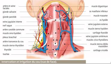 Fait mal les reins de lexercice pour le retrait de la douleur