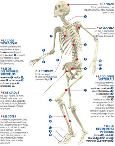 Le squelette  2ccdb21dce5
